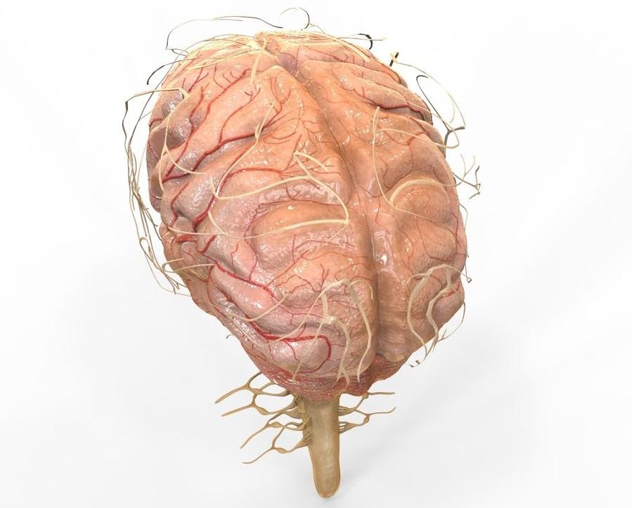 Nuevos estudios indican la presencia de disfunción cerebrovascular-neurológica en pacientes con COVID-19